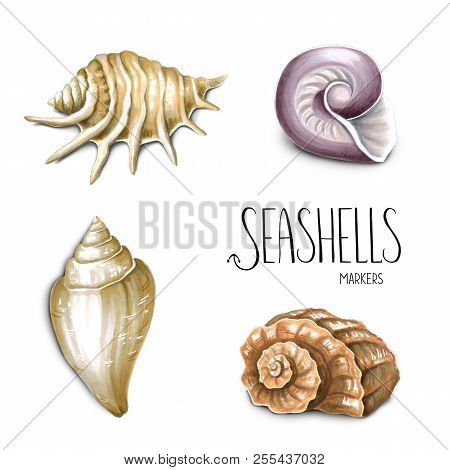 Seashells On White Background. Sketch Done In Alcohol Markers. You Can Use For Greeting Cards, Poste