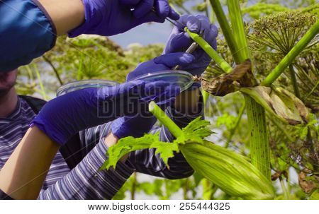 Scientists Environmentalists Man And Woman Examining Plant