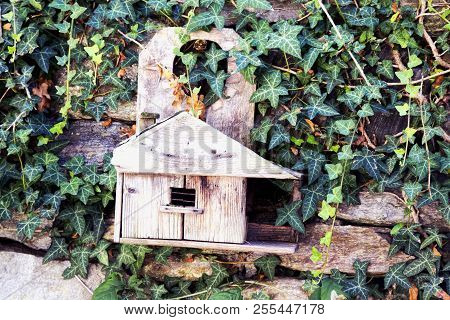 Birds Wooden House On A Wall With Ivy, Horizontal Image