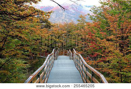 Walkway Amongst Beautiful Fall Foliage In Los Glaciares National Park, Santa Cruz Province, Patagoni