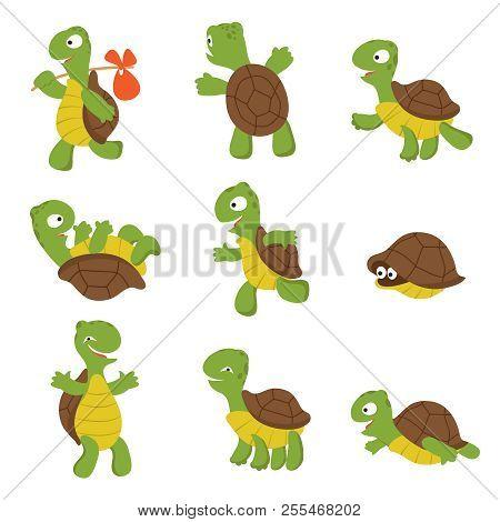 Cartoon Turtle. Cute Tortoise Wild Animal Vector Characters Isolated. Turtle Wildlife, Terrapin Wild