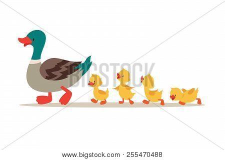 Mother Duck And Ducklings. Cute Baby Ducks Walking In Row. Cartoon Vector Illustration. Duck Mother