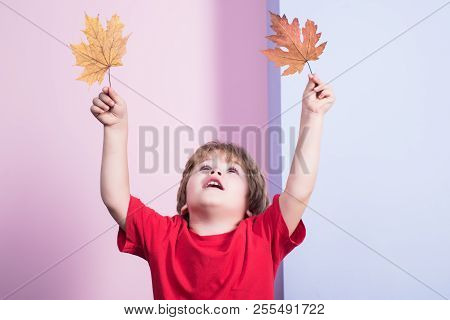Autumn. Boy Playing With Maple Leaves. Little Kid Holds Maple Leaf. Yellow Maple Leaf. Boy. Childhoo