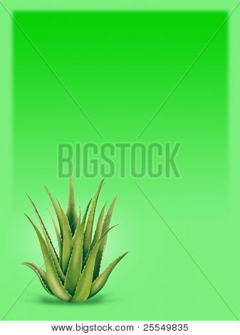 Green Background with Aloe Vera