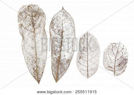 Collection Dry Leaves On Isolated White Textures Background. Dried Pattern Outdoor Dead Plant Branch