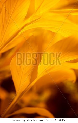 Orange Leaves. Autumn Leaves Background. Nature Background.
