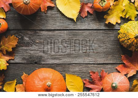 Autumn Background Fallen Maple Leaf Pumpkins Frame. Thanksgiving Day Background, Halloween Backgroun