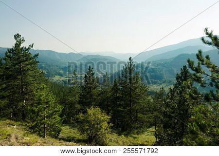 Green Valley Mountain Landscape. Pine Forest In A Green Valley.. Valley In A Beautiful Summer Day. M