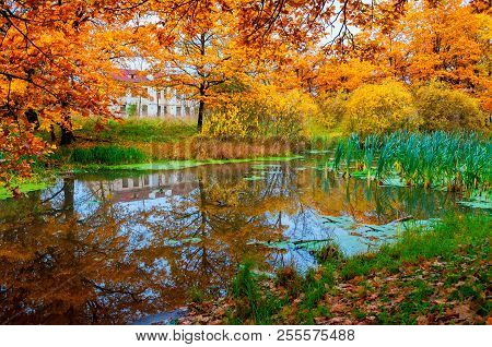 Autumn cloudy landscape in bright tones - abandoned house at the bank of the river in the autumn grove. Cloudy colorful autumn landscape scene. Autumn nature view