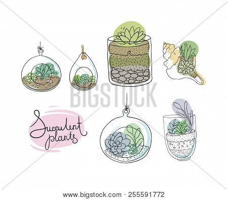 Vector glass terrariums with succulents set. Vector illustration. poster