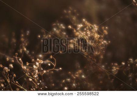 Blurred Grass Flowers Background