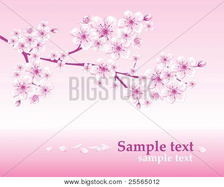 elegant spring background decorated with cherry blossoms