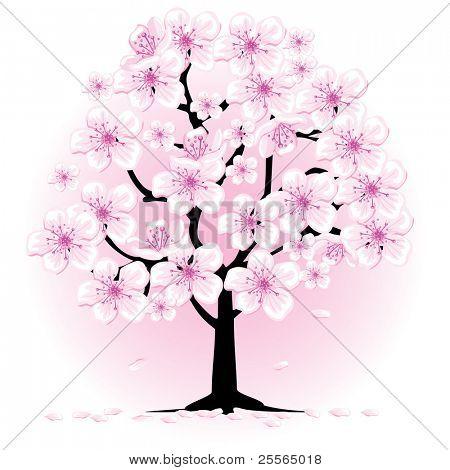 blossom cherry tree, vector illustration