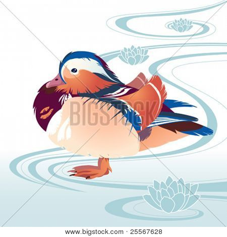 colorful exotic bird mandarina duck on the abstract floral background with water waves and lotuses