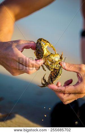 Close-up And Selective Focus On Red Sand Crab At Tanjong Lobang Beach, Miri, Sarawak, Borneo.
