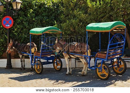 Resting donkeys harnessed to the cart resting in Mijas village. Andalusia. Spain