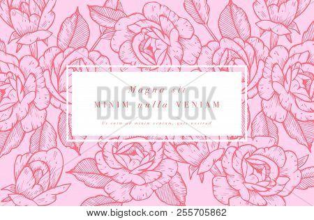 Vintage Card With Rose Flowers. Floral Wreath. Flower Frame For Flowershop With Label Designs. Summe