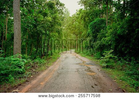 Road In Forest Nature. Green Forest Road. Nature. Road. Natural Environment. Forest Nature. Road In
