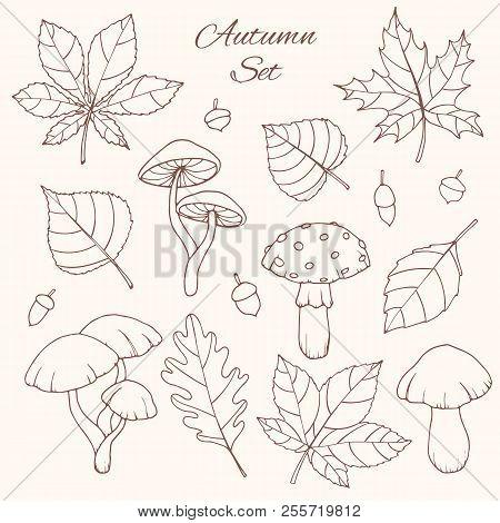 Hand Drawn Vector Autumn Set With Oak, Poplar, Beech, Maple, Aspen And Horse Chestnut Leaves, Acorns