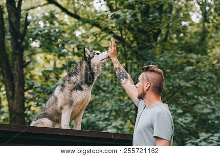 view of cynologist training with obedient husky dog poster
