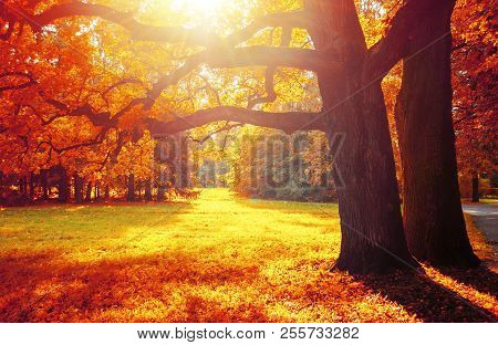 Fall Trees In Sunny October Park Lit By Evening Sunshine. Colorful Fall Landscape With Sunbeams Brea