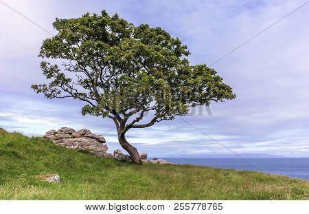 A stunning tree found at Murlough Bay, Northern Ireland.