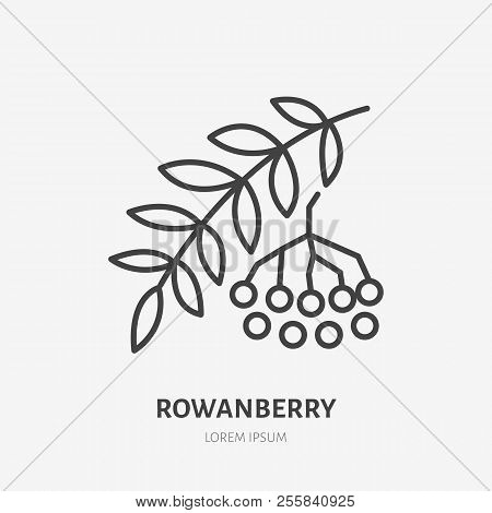 Rowanberry Flat Line Icon, Rowan Sign, Healthy Food Logo. Illustration For Natiral Food Store