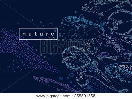 Marine Vector Template. Nature Sea Fish. Doodle Sketch Design. Hand Draw Illustration Mackerel, Flou