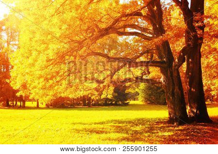 Fall Picturesque Landscape. Fall Trees With Yellowed Foliage In Sunny October Park Lit By Sunshine.