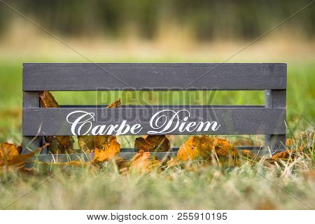 Wooden Box With The Phrase Carpe Diem In Autumn Nature