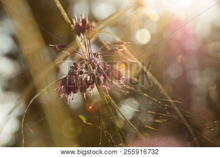 Sunny Day In Meadow Nature. Bright Sunny Day In Meadow Background. Close Up Of Forest Flowers.herbs