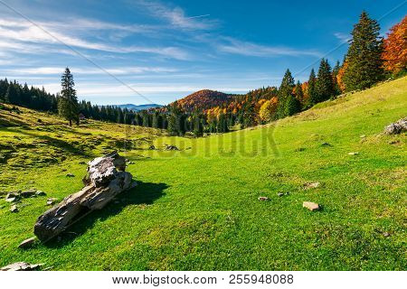 Beautiful Morning In Mountains. Mixed Forest In Fall Colors On The Hill. Log On A Grassy Meadow