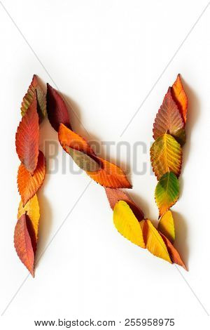 Letter N of colorful autumn leaves. Character N mades of fall foliage. Autumnal design font concept. Seasonal decorative beautiful type mades from multi-colored leaves. Natural autumnal alphabet.