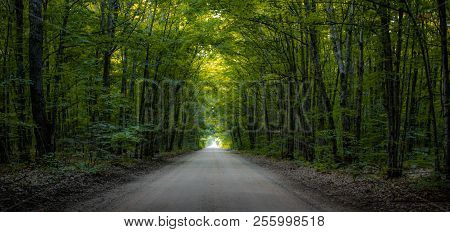 Enchanted Forest Panorama. Tunnel Of Trees Through A Dark Forest With Light At The End.