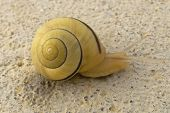 Snail plodding along on a summer day. poster