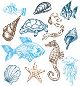 Marine life drawing poster
