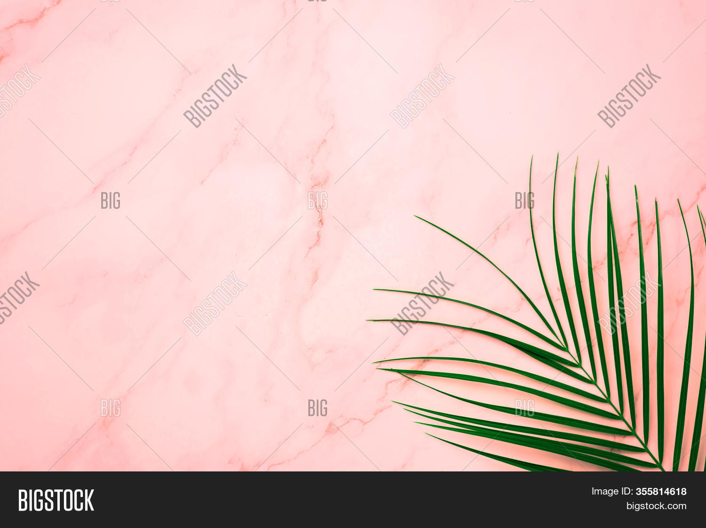 Tropical Green Palm Image Photo Free Trial Bigstock