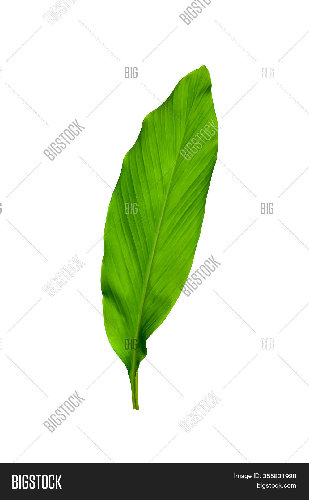 Green Leaves Turmeric Image Photo Free Trial Bigstock