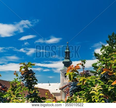 City Nitra, Slovakia. Summer Background With Ripe Grapes In Old City, Red Roofs And Church Bell Towe