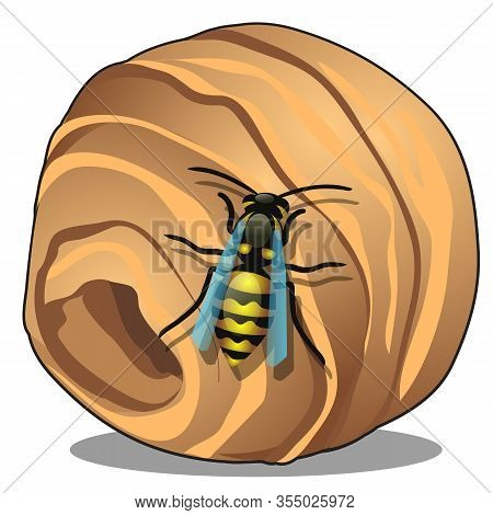 The Hornet Or Wasp Nest, Vespiary Isolated On White Background. A Hive Of Wild Forest Bees. Vector C