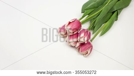 Spring Flower Landscape. Spring Blooming Spring Flowers Against Beige Background. Multi-colored Flow