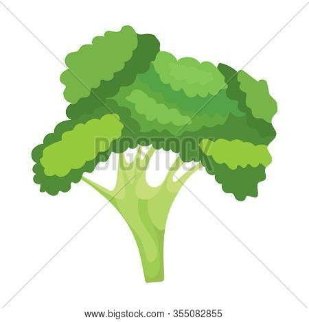 Broccoli, Green, Fresh Broccoli Isolated On A White Background. Vector, Cartoon Illustration Of Broc
