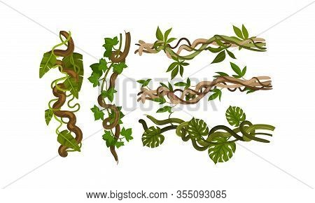 Twisted Wild Lianas With Green Twining Plants Vector Set