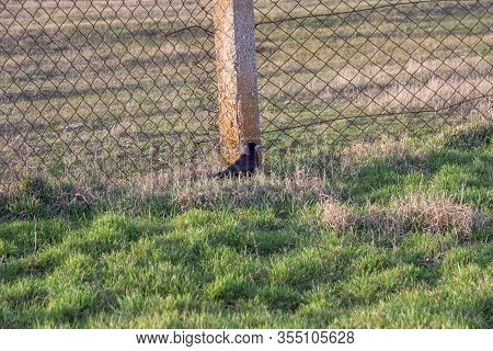 Dead Bird Crow In Green Grass. Bird Flu. Corpse Of Wild Bird. Avian Influenza Grippus Avium. Dangero
