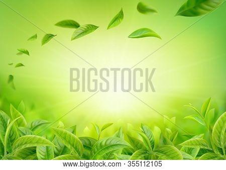 3d Realistic Vector Horizontal Banner, Nature, Tea Plantation, Green Tea Garden Background With Flyi