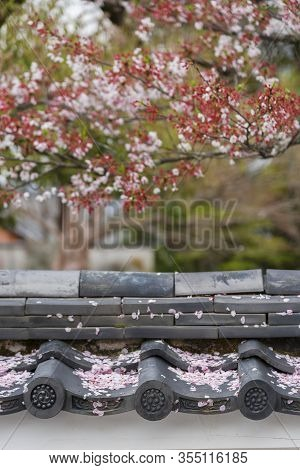 Wilted Sakura Flower Petal On Rooftop. Oriental Background