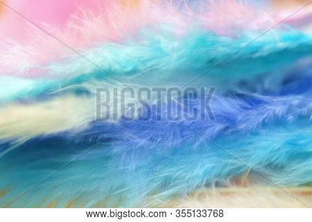 Feathers Texture In Pastel Colors.blue, Turquoise Feathers Set Background.soft Focus. Multicolored F