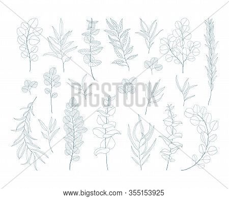 Line Art Eucalyptus Branches And Leaves Set. Exotic Floral Illustration Isolated On White Background