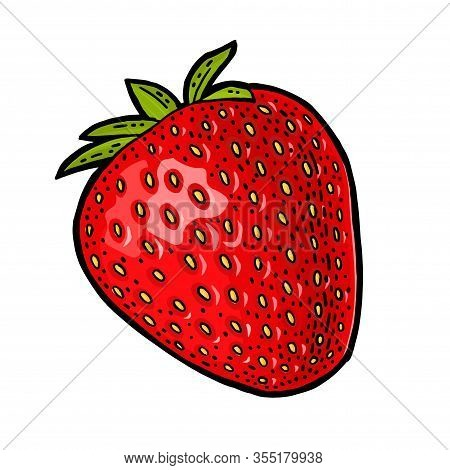 Whole Strawberry. Engraving Vintage Vector Color Illustration.