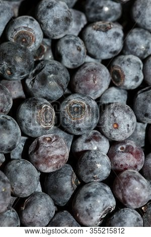 Wild Blue Berries Macro Background High Quality